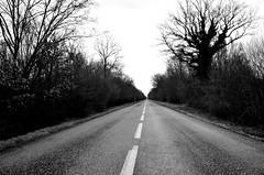 Ligne droite  - D9 -  Straight line (Philippe Haumesser Photographies (+ 5000 000 views) Tags: road arbres tree trees sky forêt forêts forest forests lignedroite straightline noiretblanc blackandwhite nikond7000 nikon d7000 reflex 2018 d9 monochrome alsace elsass france hautrhin 68