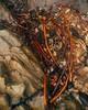 San Luis Obispo (Duvalin Papi) Tags: sanluisobispo california sadtographer nikond600 vscofilm vsco travel seaweed kelp