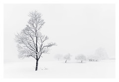 Weathered (bprice0715) Tags: canon canoneos5dmarkiii canon5dmarkiii landscape landscapephotography nature naturephotography beautiful beauty beautyinnature blackandwhite bw blackwhite winter snow snowylandscape snowing blizzard cold frigid fineart trees white highkey minimalism