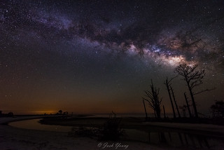 Milky Way rising over salt-weathered pine trees at Mashes Sands Beach.