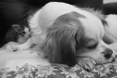 My momy is a dog!! (Slimna) Tags: friendship dog cat tenderness black white