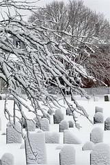 Howard St Cemetery (adamantine) Tags: howardstcemetery howardstreetcemetery snow cemetery winter wintry graveyard cold branches tree salem massachusetts