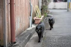 猫 (fumi*23) Tags: ilce7rm3 sony 85mm fe85mmf18 sel85f18 cat katze gato neko street alley miyazaki a7r3 animal emount 路地 猫 ねこ ソニー 宮崎 bokeh