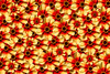 241 (robwiddowson) Tags: dahlia flower flowers digital art robert widdowson