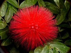 P1050857 (Eerika Schulz) Tags: blume blüte flower puyo ecuador jardin botanico las orquideas eerika schulz