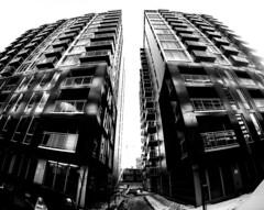 Rue Murray Twins - Griffintown (MassiveKontent) Tags: griffintown noiretblanc blackwhite montreal bw city monochrome urban blackandwhite streetphoto montréal building quebec streetphotography bwphotography streetshot gopro fisheye architecture geometric lines symmetry sky window skyscraper