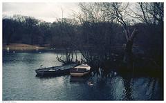 Two Rowing Boats (peterphotographic) Tags: img021edwm tworowingboats ©peterhall hollowponds walthamstow wanstead snaresbrook eppingforest eastlondon london england uk britain pond lake water boat rowingboat olympus olympustrip trip scanned film 35mm analog kodak ektar ektar100