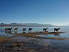 Morning promenade (khandozhkoa) Tags: 2018 nature naturephotography snapshot animals bolivia america aroundtheworld landscape landscapesdreams colors blue vacation travel traveler travelphotography sony sonyalpha emount fullframe a7riii a7 24105g