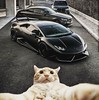 🐣 Me at Selfie, with my toys 🐣 #me #selfie #luxury #lamborghini #lambo #cat #cats #luxury #life #lujo #lifestyle #hilarious #fun #funny #sports #sportscar #animal #animals #pet #pets #vine #cabronazi #vines #xd #lol #omg #ama (Luxury Rules) Tags: luxuryrules luxury lifestyle rich money million business millionaire billion billionaire mentor motivation quotes selfie love wealth watch cute beauty beautiful swag life mood cars privatejet privateyacht jets yachts