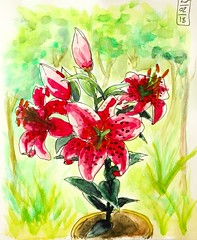 Lys. (cecile_halbert) Tags: dessin croquis aquarelle carnet lys fleurs flowers draw drawing sketch sketching sketchbook artist journal diary art journaling ink watercolor nature plante botanique botanical