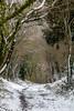 what is round the corner ? (Margaret Preuss-Higham) Tags: winter snow walking dorset path canon