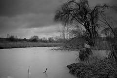 DSC02138 (Distagon12) Tags: nature landscape landshaft paysage mélancolique hiver marais lac lake noiretblanc blackwhite blackandwhite