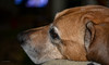DSC_0902 (Levitt Parkes) Tags: sigma 1835mm f18 art nikon d600 dog