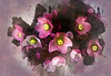 Lenten Roses (Colormaniac too - Many thanks for your visits!) Tags: helleborepink frost hellebores lentenrose spring lent march perennials flowers floral flower digitalpainting nature plant topazstudio topaztextureeffects waterlili netartll