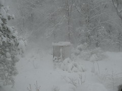 Spring this year has been cancelled! (lovesdahlias 1) Tags: noreasters storms snow nature newengland