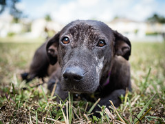 Princess  - Feb  2018 © Rui J. Teixeira-1 (Rui_Teixeira) Tags: 50 rteixeir rui ruijteixeira teixeira rteixeirgmailcom princess dog animal adoption adopted adopt