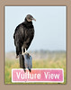 Vulture View - apparently this bird can read! :) (tvj21) Tags: vulture bird florida marsh nikon sign