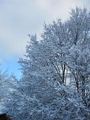 After the storm (jamica1) Tags: tree snow sky winter kelowna okanagan bc british columbia canada