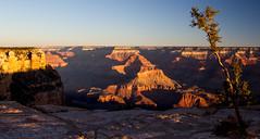 Grand Canyon-19 (amylippman1) Tags: 2016 canyon grandcanyon southrim southwest