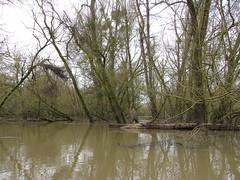 IMG_0918 (NICOB-) Tags: loire hiver nièvre bourgogne cher fleuve lumière arbres eau boisflottés embacles mousse crue cielgris nuage
