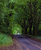 Natures tunnel, Howgare Road, Wiltshire (cantdoworse) Tags: trees road howgare broachchalke wiltshire salisbury forest nature canon 60d england