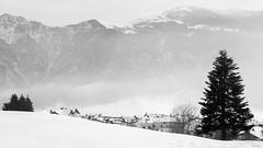 Una fredda solitudine (carlo_canaia) Tags: approvato biancoenero blackandwhite bw nebbia fog montagna mountain neve snow paesaggio landscape
