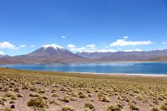 Laguna Miscanti (► Bee, like bees! <3) Tags: sanpedrodeatacama sanpedro desierto desiertodeatacama chile atacama lagunamiscanti desert