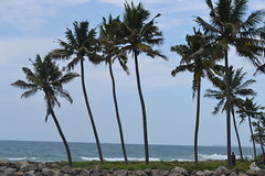 Day 9 - Kollam Beach Tour
