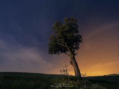 Under the stars (Carlos Server Photography) Tags: nightscapes nightphotography landscapes longexposure fotografianocturna largaexposición clouds nubes stars estrellas olympus omd5mkii zuiko714 tree arbol airelibre
