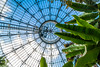 Look Up, Waaay Up.... (A Great Capture) Tags: agreatcapture agc wwwagreatcapturecom adjm ash2276 ashleylduffus ald mobilejay jamesmitchell toronto on ontario canada canadian photographer northamerica torontoexplore winter l'hiver 2018 architecture ceiling round leaves allangardens conservatory greenhouse palm house palmhouse plants foliage grreen windows dome springshow up overhead glass gardens 1910 robertmccallum eos digital dslr lens canon 70d efs1018mm 10mm wideangle city downtown urban plam palms