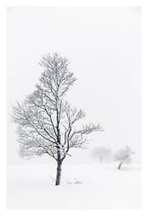 Resilience (bprice0715) Tags: canon canoneos5dmarkiii canon5dmarkiii landscape landscapephotography nature naturephotography beautiful beauty beautyinnature blackandwhite blackwhite bw monochrome mono snow swowing snowylandscape white highkey trees cold frigid fineart winter