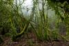 Naturaleza virgen (jonathansobrino) Tags: verde green forest selva montaña atardecer beautifull niebla españa navarra