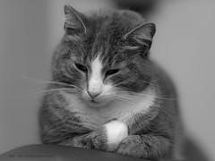 20180307002048 (koppomcolors) Tags: koppomcolors katt cat