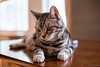 _NCL3490-Edit (chitoroid) Tags: nikond750 nikkor50mmf18g japan hokkaido sapporo cat