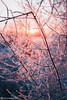 (evgenikurnikov) Tags: landscape winter nature susnet light lightroom presets