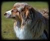 Dog Profile (Scott 97006) Tags: dog canine animal pet furry hairy cute vignette watching eye