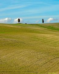 Minimal in Toscana (Darea62) Tags: minimal landscape cypress valdorcia nature panorama paesaggio tuscany toscana trees hills fields waves sanquiricodorcia unesco clouds