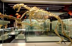 MUSEO ARQUEOLOGICO DE MADRID ALCALA DE HENARES 7767  27-1-2018 (Jose Javier Martin Espartosa) Tags: museoarqueologicoregionaldemadrid alcaladehenares madrid españa spain