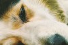 A puntó de dormir (Wal Wsg) Tags: 7dwf 7dwfwednesdaysmacro mundoanimal animalworld dog perro perrosanimales phwalwsg