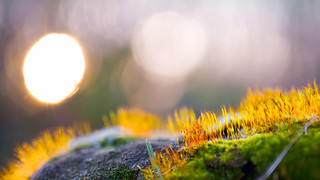 Mossy spring sunset | SONY ⍺7III (ILCE-7M3)