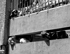 Peeping Tom (magiceye) Tags: boy peeping bridge streetportrait streetphoto mumbai india monochrome blackandwhite bnw