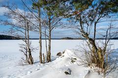Vansjø (Dirk Rosin) Tags: land landschaft landschaftnatur norge norway norwegen rygge steder vansjø landskap vinter østfold no