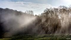 14032018-DSC_0051 (vidjanma) Tags: matin brume rayons soleil arbres transparence forêt ardenne