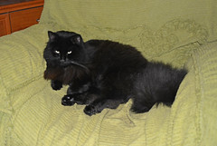 Meditation (Caulker) Tags: cat armchair meditation