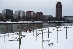 2018 Schnee auf der Weseler Werft im März (mercatormovens) Tags: frankfurt mainufer city ostend main