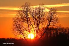 Sunset @ Melden , Belgium 2018 (Fabrice H. - Photography) Tags: melden oudenaarde kluisbergen vlaamseardennen vlaanderen oostvlaanderen sun sunny sunset sunsets zonsondergang zon soleil tree nature sky orange colorful outdoor