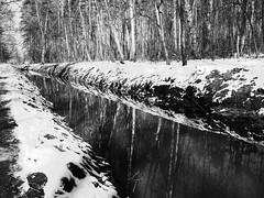 white canal (Darek Drapala) Tags: winter white snow water creek trees reflection reflects cold nature forest panasonic poland polska panasonicg5 olszynka lumix light