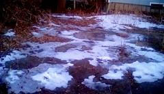 Melting snow! 365/147 (Maenette1) Tags: melting snow ice backyard menominee uppermichigan flicker365 michiganfavorites project365