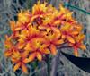 Foster Botanical Garden (sembach001) Tags: fosterbotanicalgarden honolulu hawaii panasoniczs100 flowers tropicalflowers