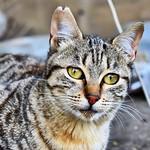 Muero de #amor con esta gatita #gatos #gatoscallejeros #cats #photocats #instacats #neko #meow #gatze #gatto #koshka #catsofworld #catsofinstagram #streetcats #chat #eyelicious #sweet thumbnail